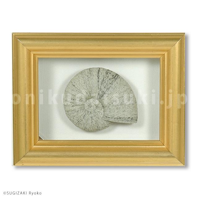 motif : ammonite,2018